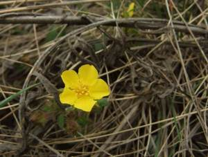 Цветы с кундрюченских склонов.jpg