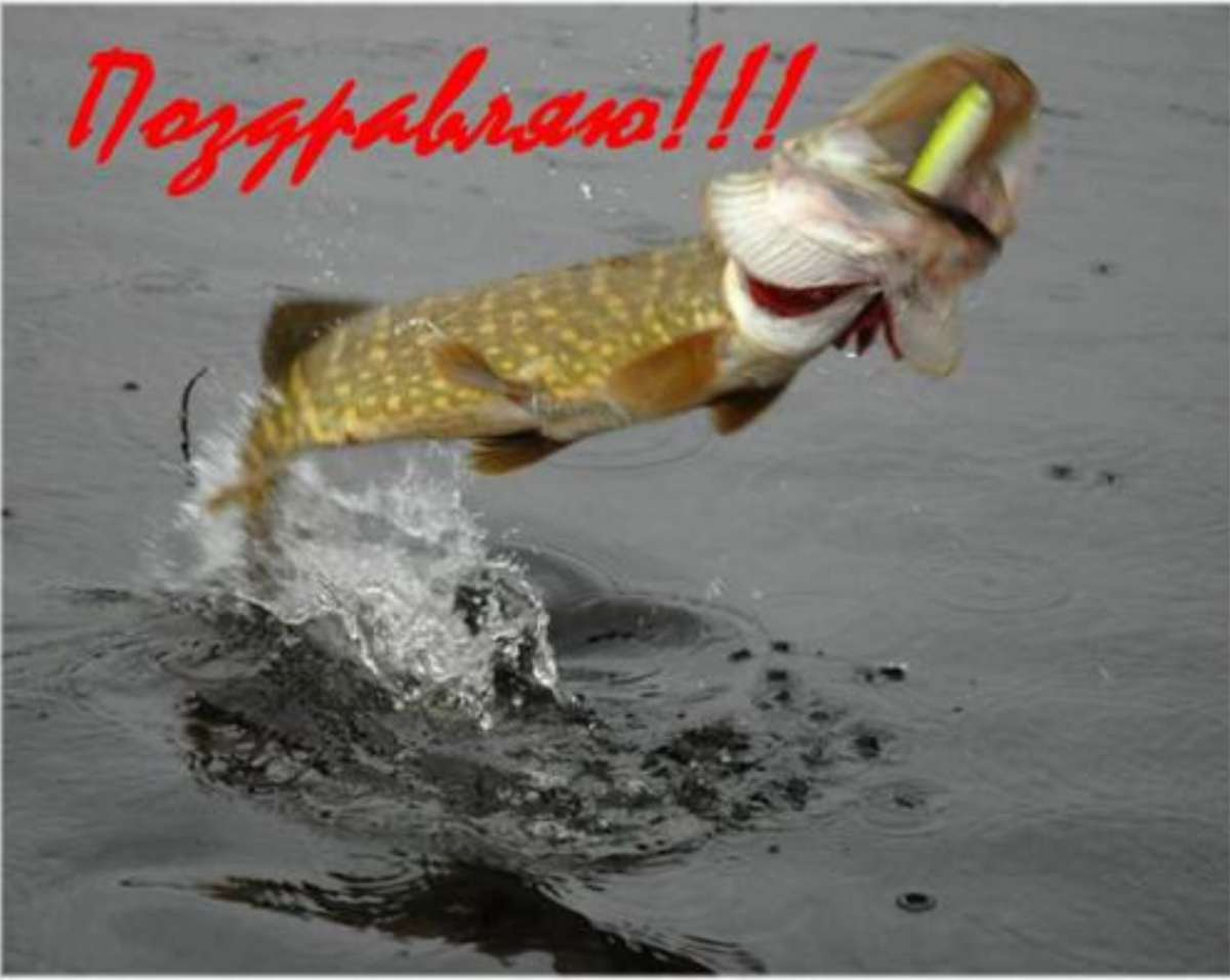 Поздравления с юбилеем рыбаку - Поздравок 36