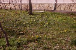 http://forum.toadstool.ru/uploads/monthly_2018_03/5aa0f7a6981aa_DSC05012.thumb.jpg.eb7a4ad4dd7f07c66b3b875aa34ae0a6.jpg
