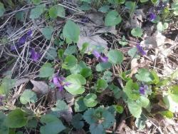 http://forum.toadstool.ru/uploads/monthly_2018_03/5abfcbbe0d7ee_.thumb.jpg.f14110e85b0e63e74c435d172ff3b972.jpg