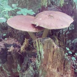 в лесу 110.jpg