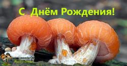 rhodotus-4.thumb.png.48d9741d30d4998ed08353754fa44a8b.png