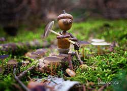 jarni-houby.jpg