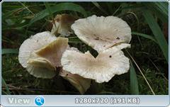 0_fbec9_8e9359fb_orig.png