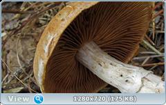0_f3254_a2718cfd_orig.png