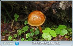 0_fb900_cdc2f4c5_orig.png