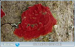 0_fc286_45c9b249_orig.png
