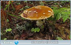 0_fbb76_55c5569d_orig.png
