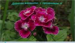 0_100215_2dcc3739_orig.png