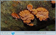 0_fc664_31e5234d_orig.png