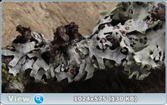 thumb.1583672548.png