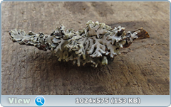 thumb.1583672872.png