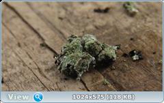 thumb.1583673627.png