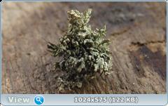 thumb.1583676494.png
