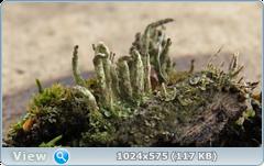 thumb.1583676624.png