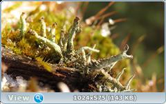 thumb.1583676653.png