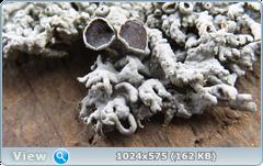 thumb.1583677756.png