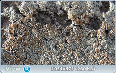 thumb.1585365204.png