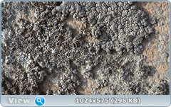 thumb.1585365410.png