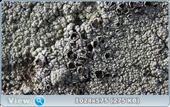 thumb.1585365431.png