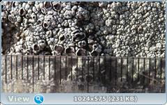 thumb.1585365495.png