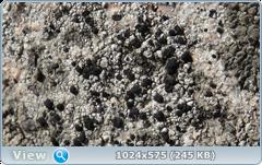 thumb.1585366364.png