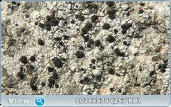 thumb.1585366387.png