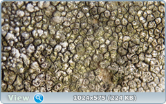 thumb.1585367118.png