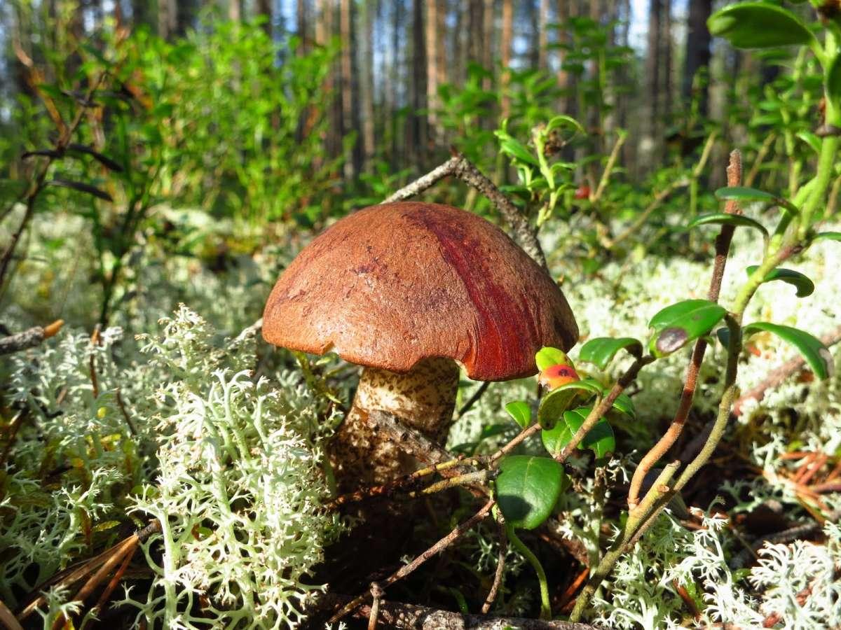 посмотреть фото ягоды и грибы в карелии самых