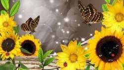 sunflowers-after-the-rain.thumb.jpg.0d6d50d48753d2fee54dad4a655b275f.jpg