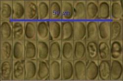 Spores53_pixi.thumb.jpg.0f8c9670ff7b43b2cd06283f0ef7fec5.jpg