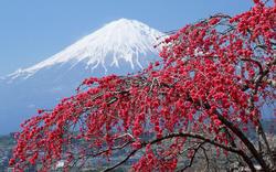 gora-fudziyama-sakura-derevo.thumb.jpg.9b9ad629b41d7b310e819aa82895d75d.jpg