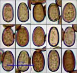 sp-front09_pixi.thumb.jpg.fa4f586ca0c0f548c0e2aca07584d5b3.jpg