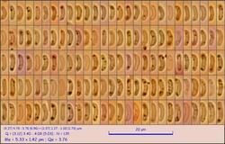 sp297_pixi.thumb.jpg.ce68b0a719b8ae02fe3b7b78387d7476.jpg