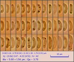 sp96_pixi.thumb.jpeg.24833be4d3f50a152896156253c73f71.jpeg