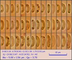sp96_pixi.thumb.jpeg.2936f0c81cb0629c0e300eec1480fdf2.jpeg