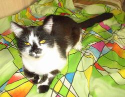 cat.thumb.jpg.a615914a0f98ddc223c4fa58c275bb05.jpg