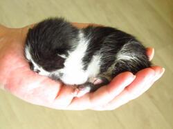 cat1.thumb.jpg.484ac210033034079d8749f494ea97fd.jpg