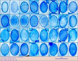 sp100121_pixi.thumb.jpg.6812f1dbf09cfae37158a1d49255add9.jpg